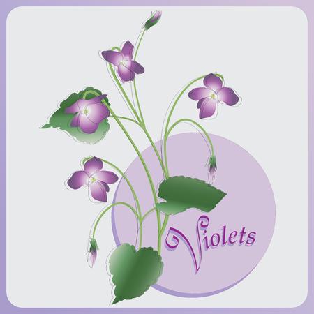 Bouquet de violettes. image vectorielle. Composition pour les cartes décoration de vacances, l'emballage, le parfum, la confiserie, les souvenirs.