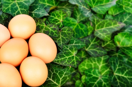 Group eggs on a background of green ivy leaves