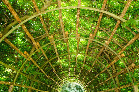 A tunnel of greenery in Potsdam, Brandenburg, Germany photo