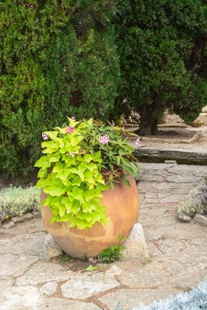 ollas de barro: Grandes ollas de barro antiguas en Jardín Botánico de Balchik, Bulgaria