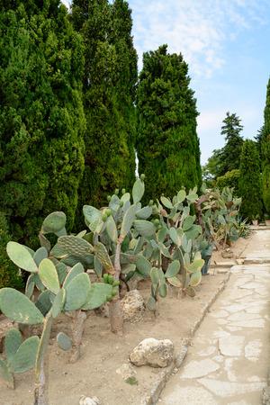 balchik: Botanical cactus garden of Balchik, Bulgaria