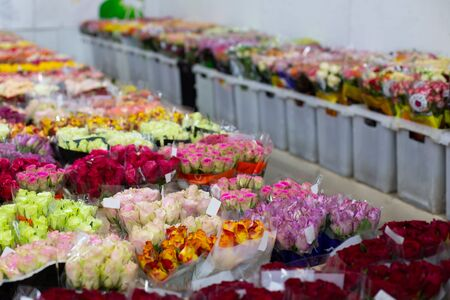 Multi-colored roses red, pink, yellow, white, orange. Wholesale floristic base, shop with flowers for Valentine's Day on February 14 or International Women's Day on March 8. Standard-Bild