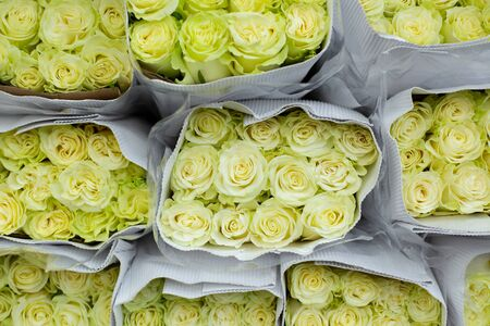 Roses yellow, white. Wholesale floristic base, shop with flowers for Valentine's Day on February 14 or International Women's Day on March 8.