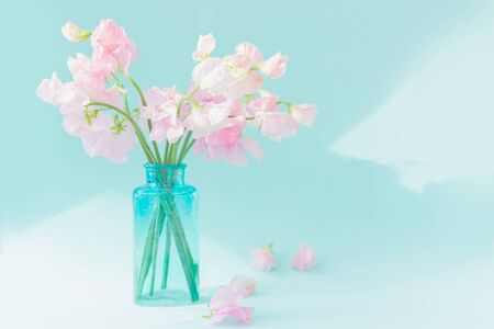 Bouquet of soft pink sweet peas Lathyrus in beautiful transparent vase on blue background.Copy space.Spring concept.Postcard for International Women's Day on March 8, Valentine's Day,14 of February.