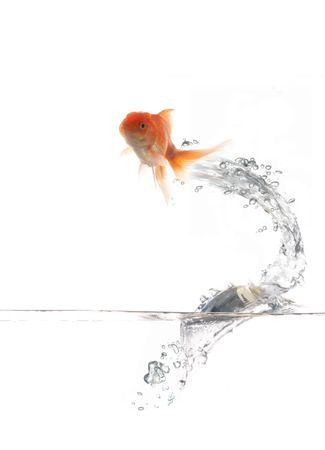 An image of golden fish on water Stock Photo