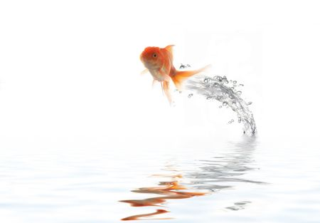 An image of flying goldfish Stock Photo - 3203357