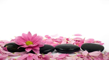 clearness: A row of black stones for SPA and petal