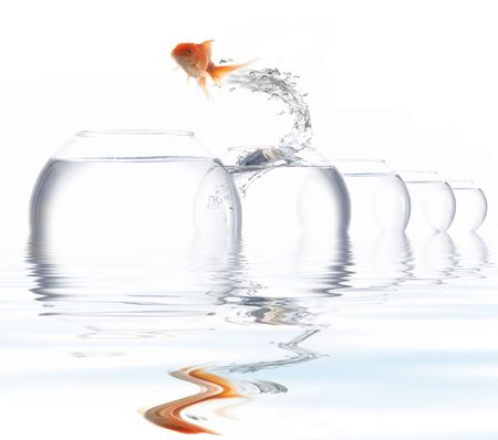 An image of a golden fish leaping out of the water photo