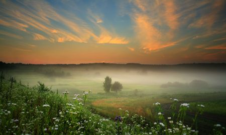 An image of misty landscape with flowers and trees