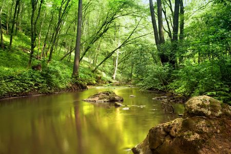 riverside tree: An image of a river in spring forest