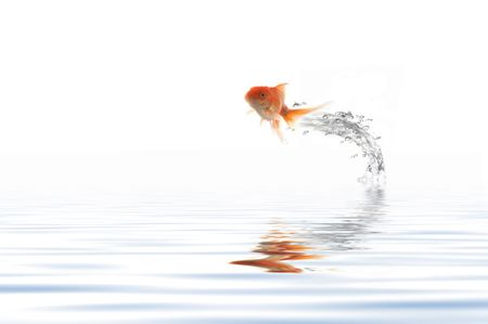 A fish leaping out of the water photo