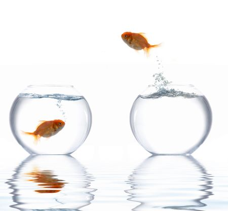 An image of a fish leaping out of the water photo