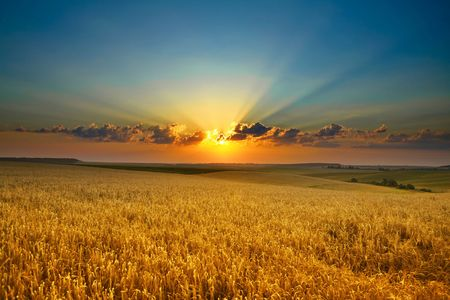 An image of a sunset over a golden field Stock Photo