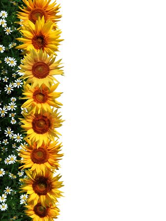 An image of sunflowers in a line. photo