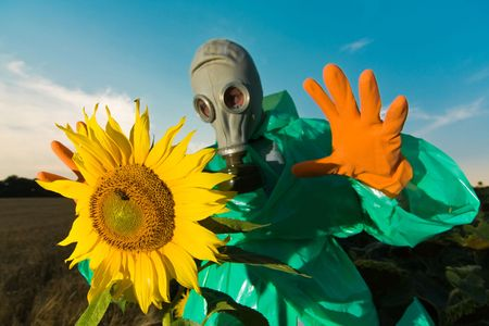 Man in a respirator on sunflower field Stock Photo - 3415309