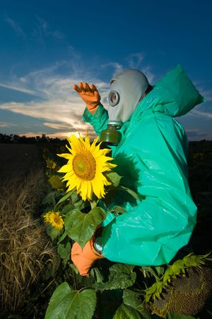 Man in protective suits with gas mask on sunflower field photo