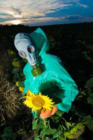 Man in gas mask on sunflower field photo