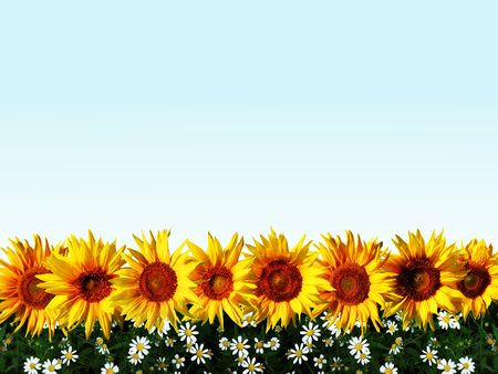 An image of sunflowers and grass in a line. photo