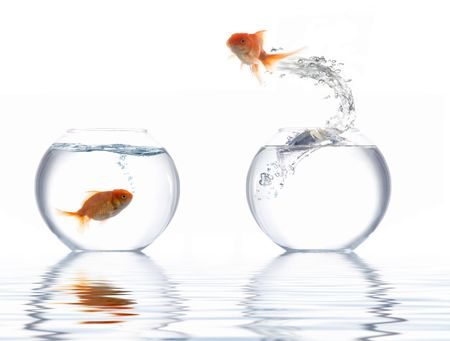 A fish leaping out of the water Stock Photo
