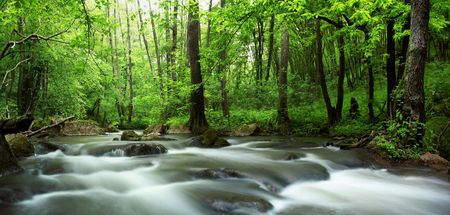 riverside tree: An image of a river in green forest