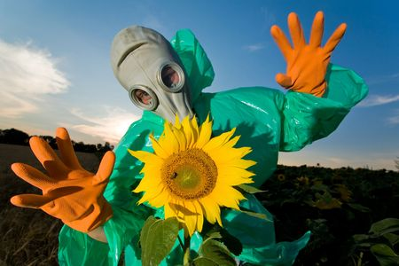 Man in a respirator on sunflower field photo