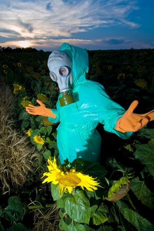 An image of a man in gas mask on sunflower field photo