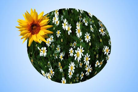 An image of earth with yellow sunflowers photo