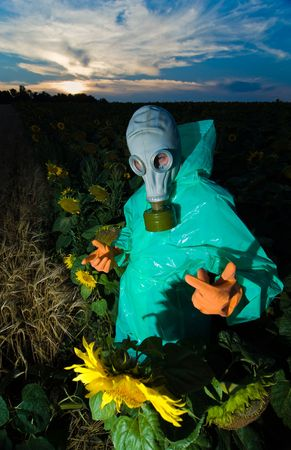 Man in protective suits and gas mask on sunflower field photo