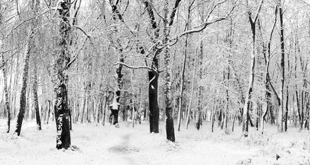 Cover of first snow on a forest photo