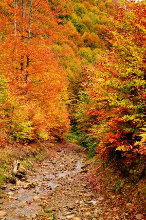 An image of a autumn trees in a forest Stock Photo - 3718622