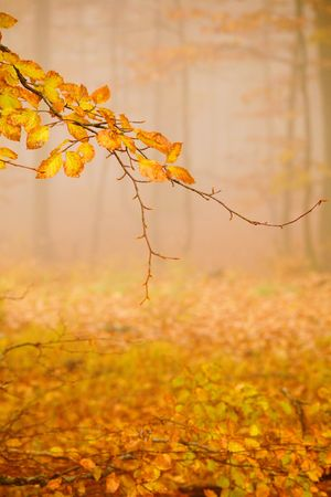 An image of a golden trees in a misty forest photo