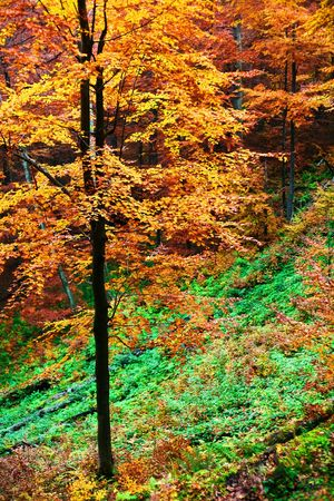 An image of a yellow tree in forest Stock Photo - 3718632