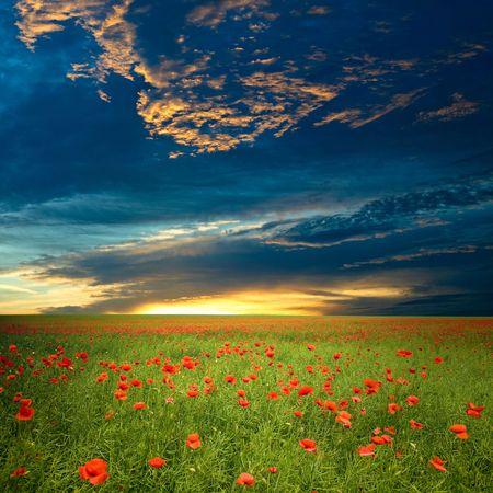 Campo verde con rojo amapola bajo dramáticas nubes Foto de archivo
