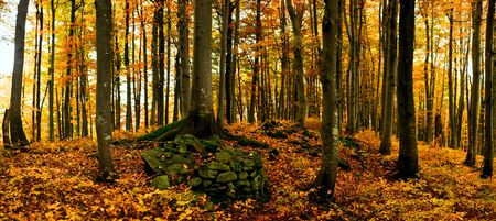 Image of tree in autumn forest. Panorama. photo