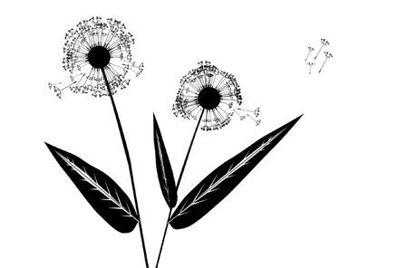 Stock photo: nature: an image of silhouette of dandelion Vector