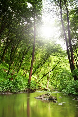Stock photo: an image of a forest and a river photo