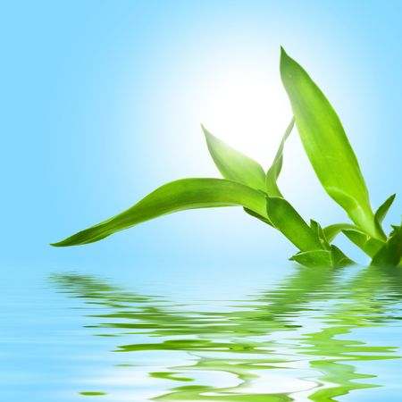 Nature theme: an image of green leaves in water Stock Photo