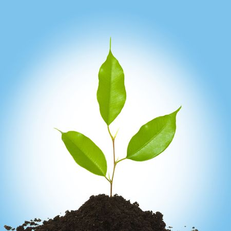 An image of a fragile green plant in the ground Stock Photo - 4586793