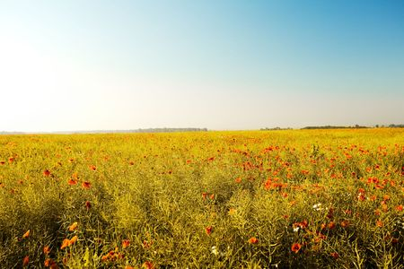 An image of beautiful summer field of red poppies