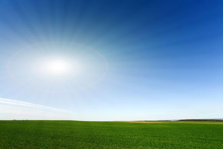Fresh green crops on the bright blue cloudless sky background