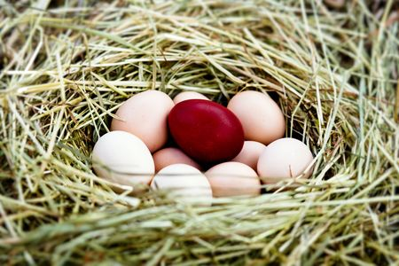 Several fresh eggs and  Easter  egg in a nest Stock Photo - 5144474