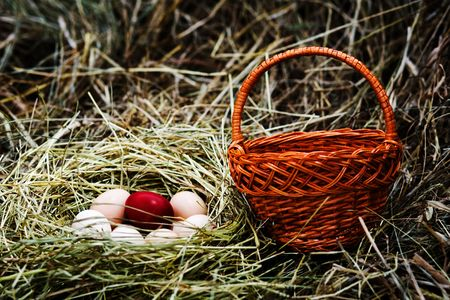 Several fresh eggs and  Easter  egg in a nest Stock Photo - 5416693