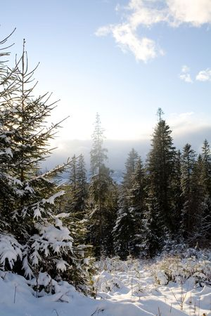 An image of a beautiful winter in the forest photo