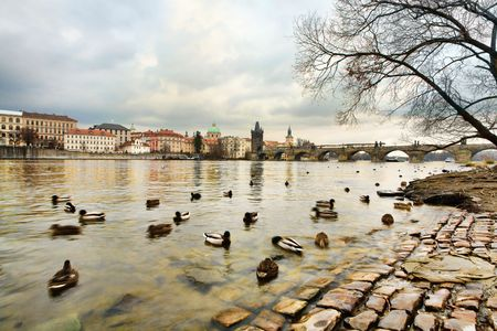 vltava: View of Charles bridge and river Vltava