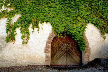 An image of a door overgrown with ivy photo