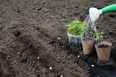 An image of a green plants and watering can Stock Photo - 6876398