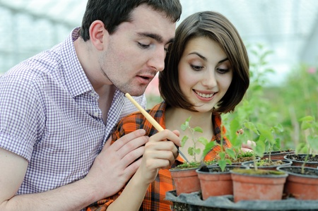 An image of a young couple planting something into the pot photo