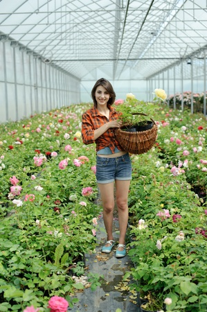 An image of a woman with a basket in a greenhouse photo