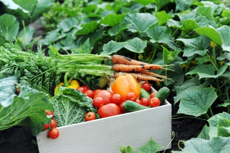 An image of fresh vegetables in a crate Imagens
