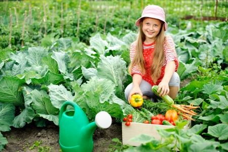harvesting: An image of a nice little girl in the kitchen-garden